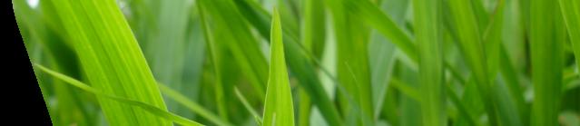 Rasenmäher Ersatzteile | Ersatzteilecenter.de